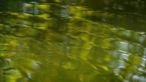 Superficie del agua en el río almacen de metraje de vídeo