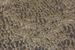 Superficie del fango marrón para el fondo Foto de archivo libre de regalías