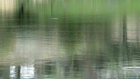 Superficie del lago e siluette d'increspatura dell'albero di legno video d archivio