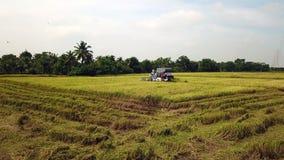 Superficie del metraggio che segue nell'azienda agricola del riso sulla mietitrice archivi video