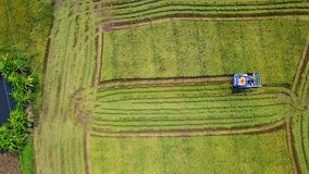 Superficie del metraggio che segue nell'azienda agricola del riso sulla mietitrice video d archivio