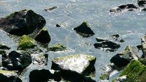 Superficie dell'acqua dell'oceano e scogliera costiera, alghe, alga, riflusso, ghiaia, inquinamento della roccia archivi video