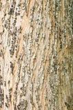 Superficie dell'albero Immagine Stock Libera da Diritti