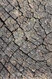 Superficie dell'albero di taglio Fotografia Stock