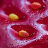 Superficie della fragola con i semi Fotografia Stock Libera da Diritti