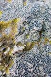 Superficie della muffa di una pietra Fotografia Stock