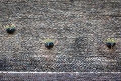 Superficie della parete di pietra con il fiore del vaso Immagine Stock Libera da Diritti