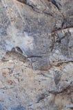 Superficie della roccia Immagini Stock
