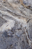 Superficie della roccia Fotografie Stock Libere da Diritti