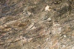 Superficie della roccia alta di fine, strutturato di pietra Fotografia Stock