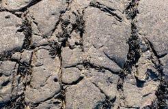 Superficie desigual de una piedra negra con las grietas de ocupación de la alga marina fotografía de archivo libre de regalías