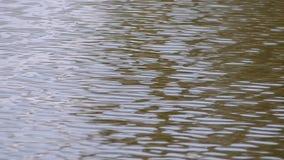 Superficie di acqua stock footage