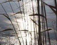 Superficie di congelamento del lago Immagini Stock