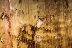 Superficie di di legno Fotografie Stock Libere da Diritti