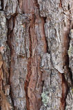 Superficie di legno duro marrone Immagini Stock