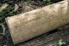 Superficie di legno marcio con i fori Immagini Stock Libere da Diritti