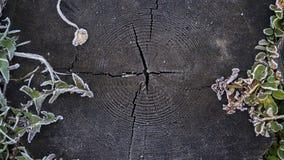 Superficie di legno scura con la struttura della pianta del gelo, fondo per testo immagini stock libere da diritti
