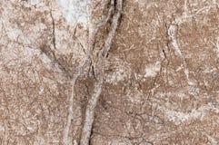 superficie di pietra incrinata Immagini Stock Libere da Diritti