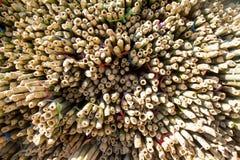 Superficie di taglio della sezione da bambù Immagini Stock Libere da Diritti