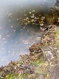 superficie esterna dell'acqua di giorno di autunno del paesaggio del lago della natura bella fotografie stock libere da diritti