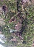 Superficie estructural hermosa de la corteza en diversos árboles Apenas corteza en un árbol Fotos de archivo libres de regalías
