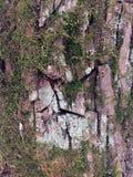 Superficie estructural hermosa de la corteza en diversos árboles Apenas corteza en un árbol Fotos de archivo