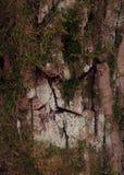 Superficie estructural hermosa de la corteza en diversos árboles Apenas corteza en un árbol Imágenes de archivo libres de regalías