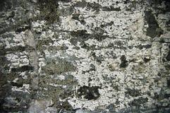 Superficie extraña del cemento Fotos de archivo libres de regalías