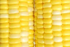 Superficie fresca del maíz Imágenes de archivo libres de regalías