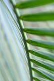 Superficie inferior de la fronda de la palma imagen de archivo