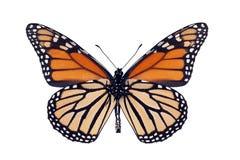 Superficie inferior de la mariposa de monarca Fotos de archivo libres de regalías