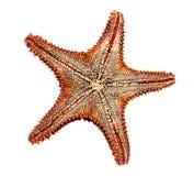 Superficie inferior de las estrellas de mar Imágenes de archivo libres de regalías