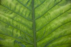 Superficie inferior de una hoja verde Foto de archivo libre de regalías