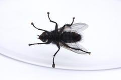 Superficie inferior de una mosca en un vidrio Imagen de archivo libre de regalías
