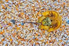 Superficie inferior del cangrejo de herradura en cáscaras del mar Fotografía de archivo