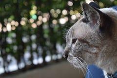 Superficie laterale del gatto Fotografia Stock Libera da Diritti