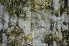 Superficie modelada de la piedra Fotografía de archivo