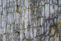 Superficie modelada del fósil Imagen de archivo libre de regalías