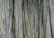 Superficie modellata degli alberi morti Fotografie Stock Libere da Diritti