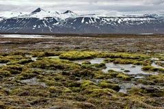 Superficie mojada en Svalbard Imagen de archivo libre de regalías