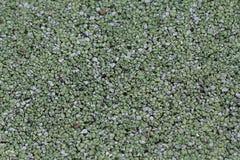 Superficie molle verde della gomma Fotografie Stock