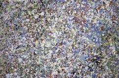 Superficie pintada extracto de la pared Fotos de archivo libres de regalías