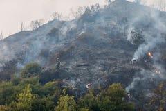 Superficie quemada de la tierra después de un incendio forestal Fotos de archivo