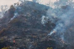 Superficie quemada de la tierra después de un incendio forestal Foto de archivo libre de regalías