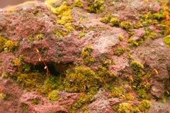 Superficie rossa della roccia con muschio Immagini Stock
