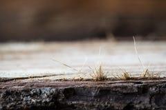Superficie strutturata di legno Fotografie Stock Libere da Diritti