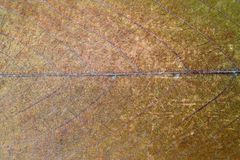 Superficie sucia de la hoja Foto de archivo
