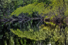 Superficie y bosque del agua Foto de archivo libre de regalías