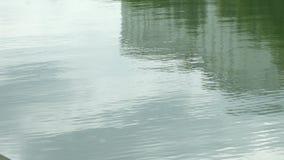Superficie y reflexiones de ondulación lisas del agua almacen de metraje de vídeo