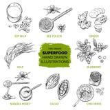 Superfood, συρμένο χέρι σκίτσο Στοκ Εικόνα